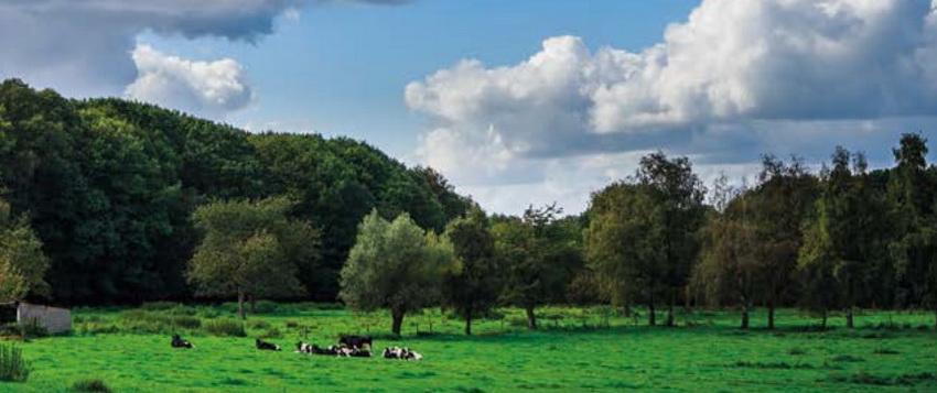 Gemeente Asse koopt 11 hectare Kravaalbos.
