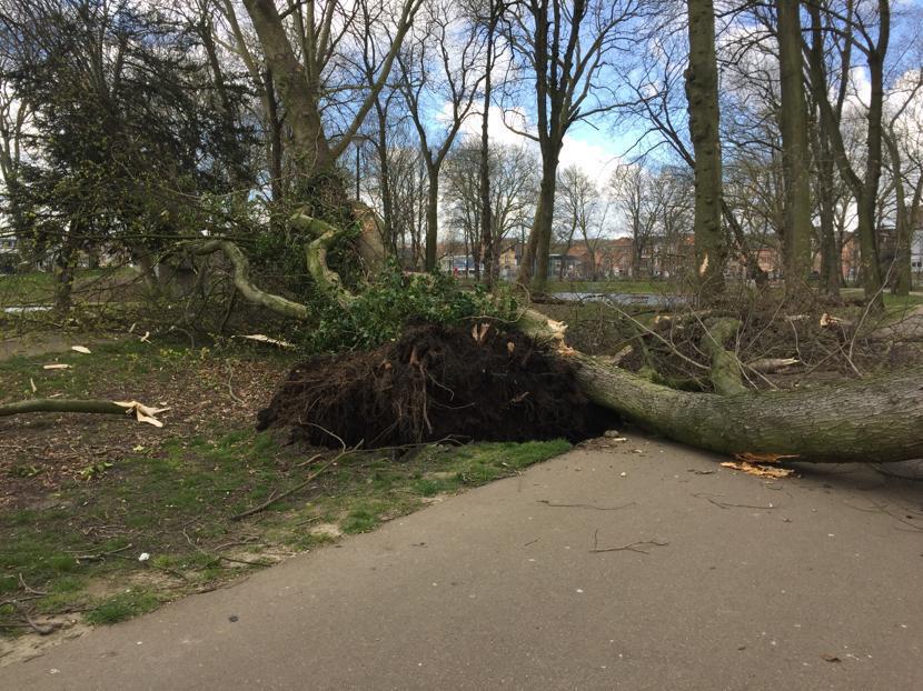 Hanssenspark gesloten nadat twee bomen omvallen