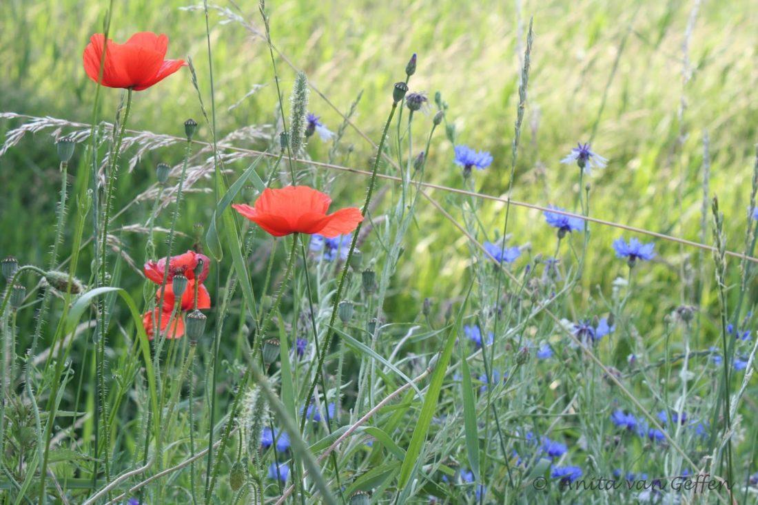 73 ha bloemen voor de bijen