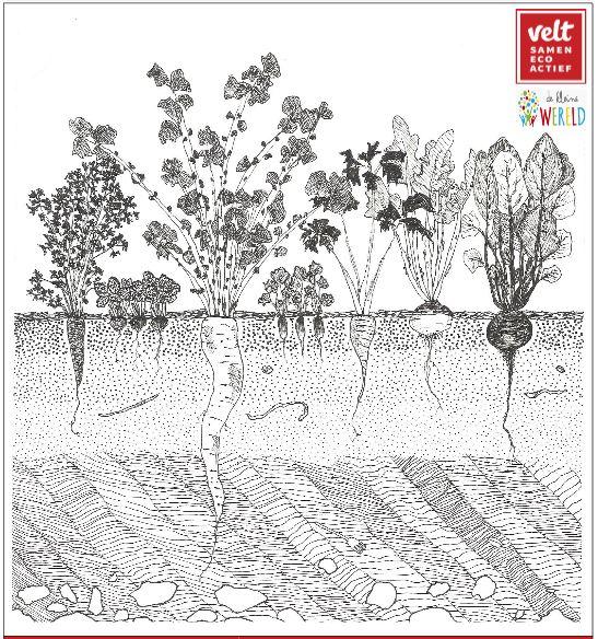 Planten(ruilbeurs) VELT Groot-Asse
