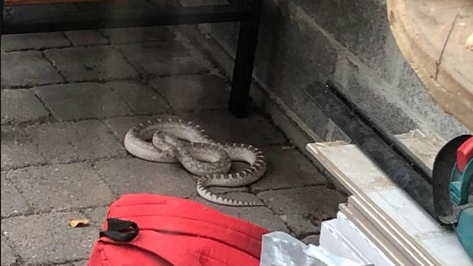 Grote slang onder barbecuestel schrikt Vilvoords gezin op