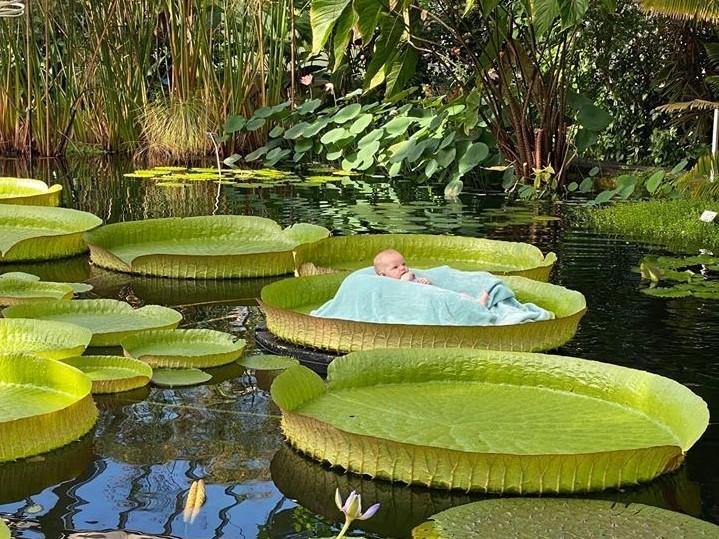 Extra fotoshoot met baby's op reuzenwaterlelies
