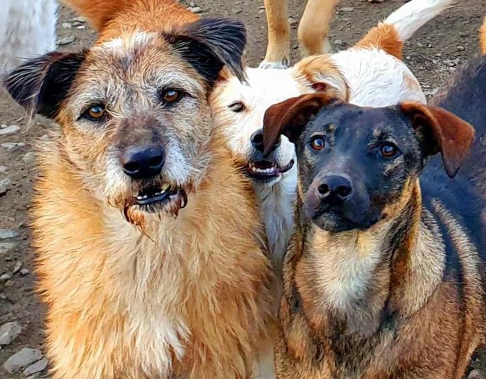 Uw hulp nodig: actie hondenvoer